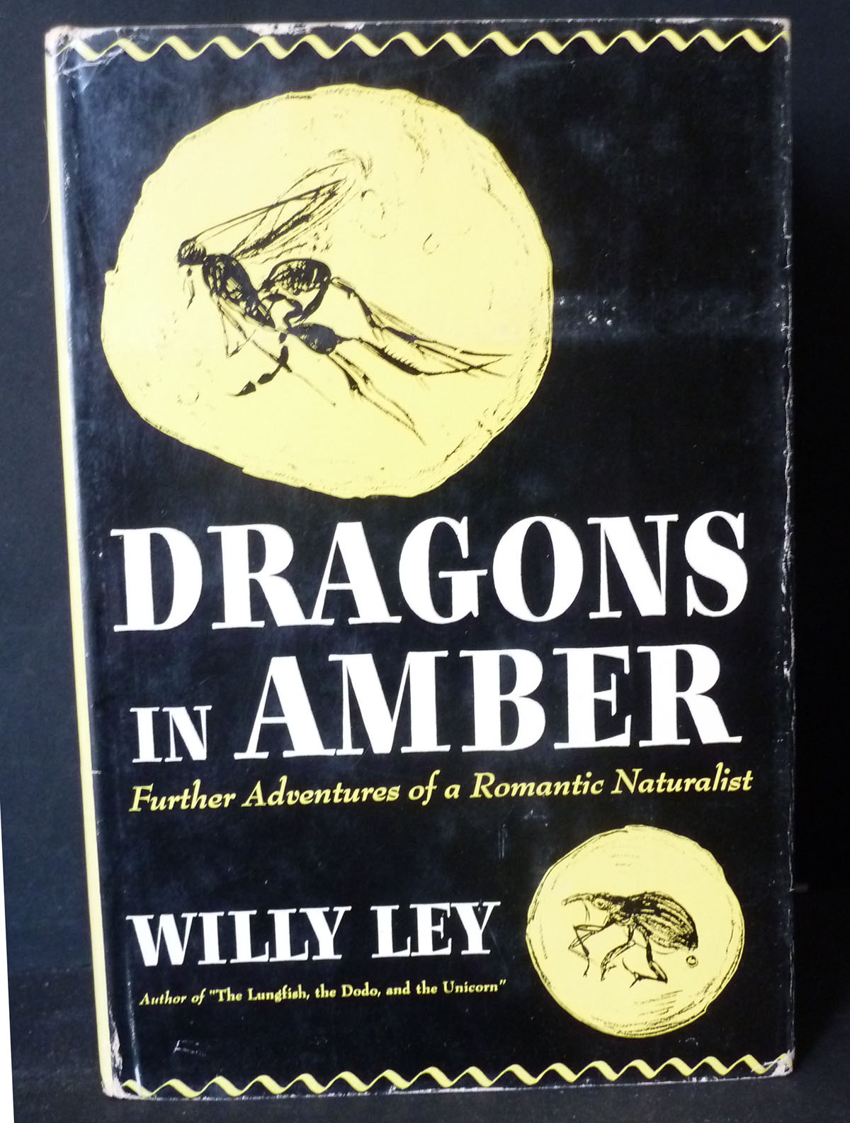 Image for Dragons in Amber